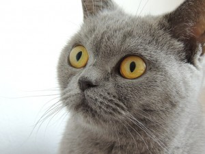 cat communication helps with behavior problems