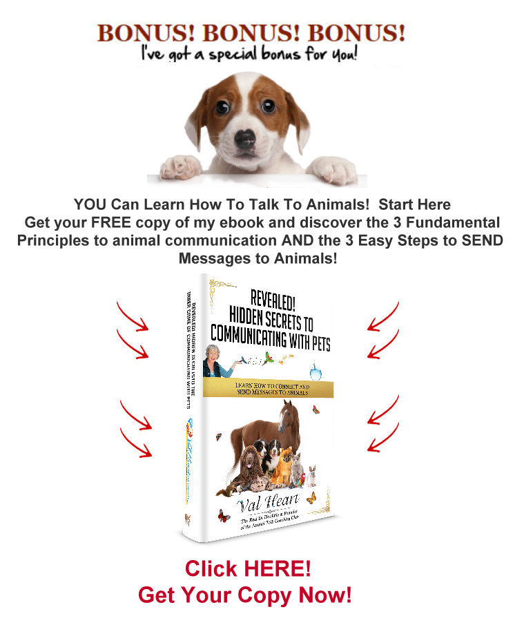 Secrets to communication with pets ebook gift